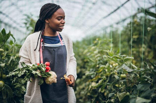 10 Profitable Agricultural Business in Nigeria