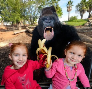 The gorilla withthe kids