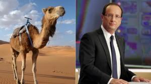 Hollande with camel