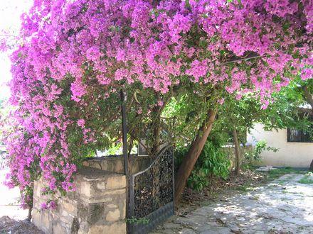 side_flower_tree
