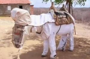 Bee-Keeping-Donkey