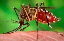 Incrementan casos de Dengue en Chiapas, van tres muertes en menos de 15 días