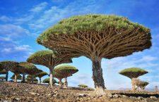 Los 15 árboles más magníficos del mundo