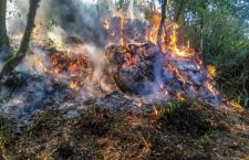 Suman 186 incendios forestales en Oaxaca en 2019