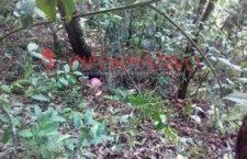 Hallan los cadáveres de una mujer y un niño en Putla; aparentemente fueron asesinados con arma blanca | Informativo 6 y 7