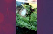 #Video📹 Encuentran una rana viva en una ensalada 🥗🐸
