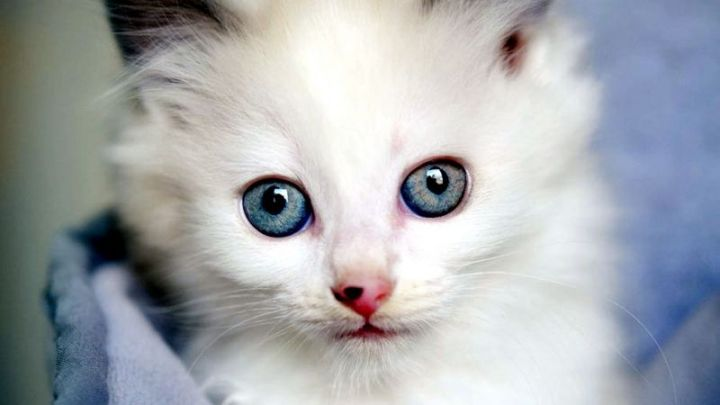 Background Anak Kucing Lucu