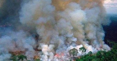 Los incendios en la Amazonía disparan alarmas en el mundo