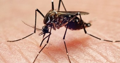 La malaria triplicó su incidencia en 2019