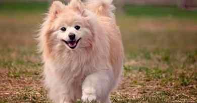 Fallece primer perro infectado por COVID-19