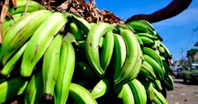 Inespre vende plátanos a 1.00 peso en sus mercados y bodegas móviles