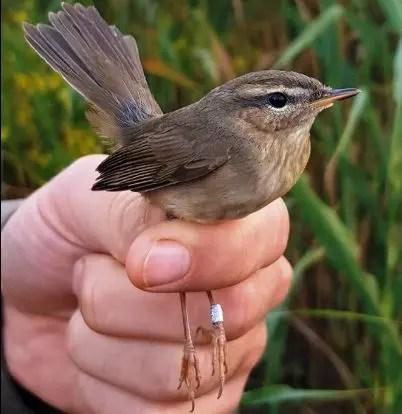 Zbulohet zogu i rrallë në Orikum…