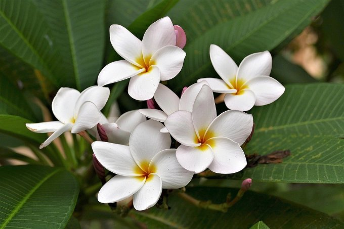 top 10 the most beautiful flower in the world