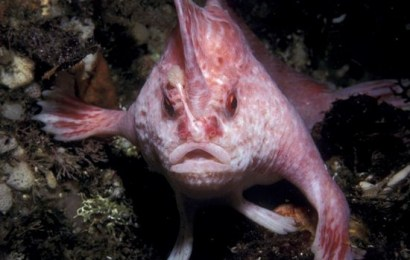 Info Santai: Ikan Ini Mempunyai Tangan