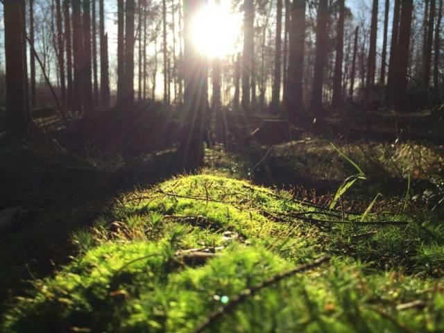 foto sewaktu golden hour pagi