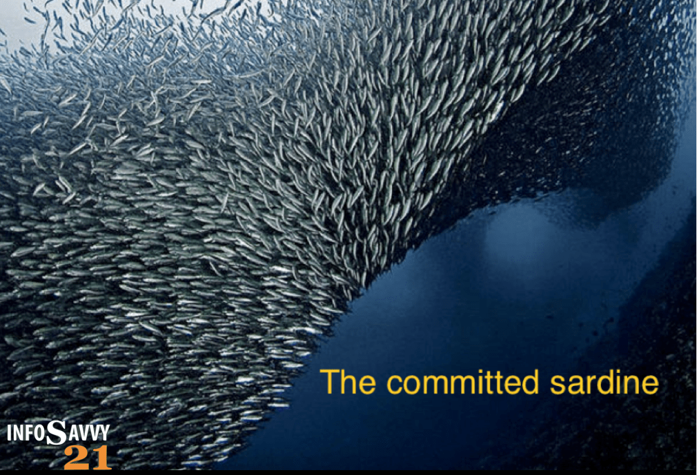 Committed Sardine Logo 2