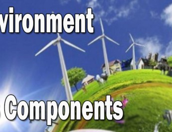 Environment and its components