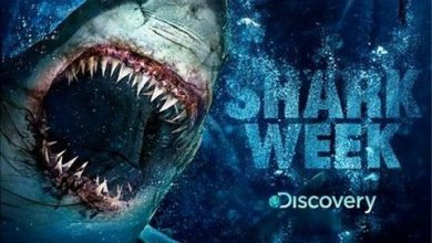 Photo of Shark Week