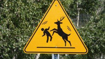 World Animal Crossing Signs 2