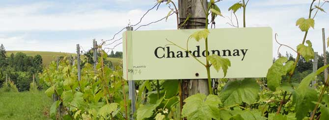 Photo of What Do You Know About California Chardonnay? [Infographic]