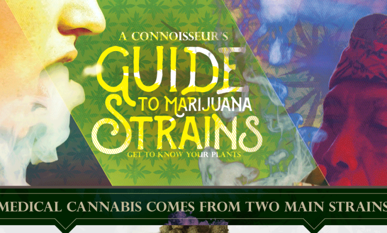 Photo of Medical Marijuana Is More Complicated Than You Think [Infographic]