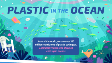Photo of Is Plastic In The Ocean Really A Problem?