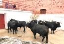 Los toros de Ángel Sánchez y Sánchez ya han sido desembarcados en la plaza de Montoro