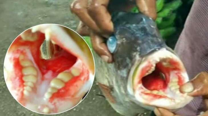 человеческими зубами
