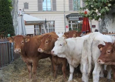 Troupeau de vaches par Senseveria.