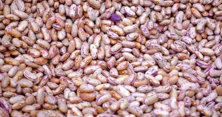Beans farming in Nigeria
