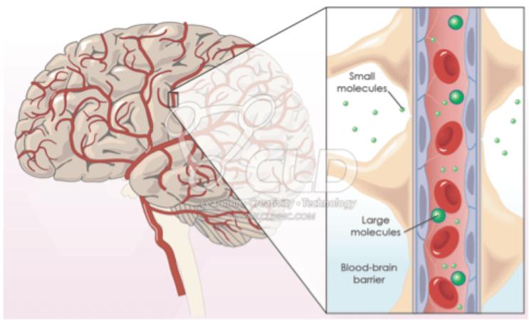 barreira hematoencefálica