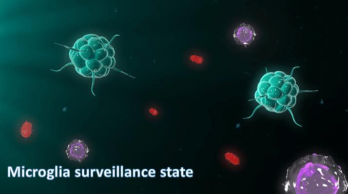 estado de repouso e vigilância