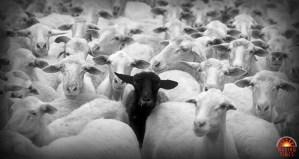 imunidade de grupo usada para instigar o medo e a culpa