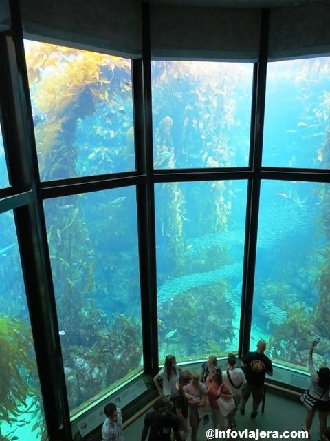 MontereyAquarium12