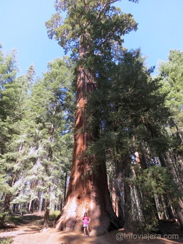 Sequoia7