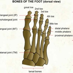 Bones In Your Foot Diagram Usb Pinout Of The Visual Dictionary