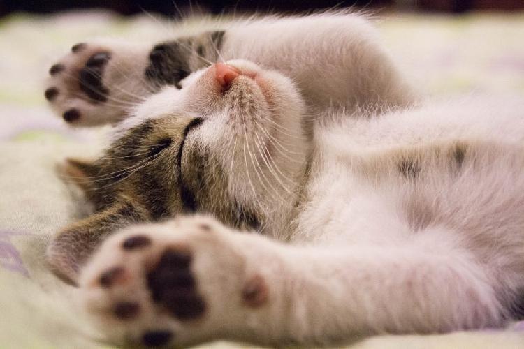 Чем можно заразиться от кошек