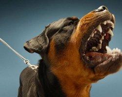 Самые опасные породы собак. Стоил ли заводить?