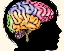 Как работает мозг у подростка. Почему они ведут себя так, а не иначе? Как их понять?