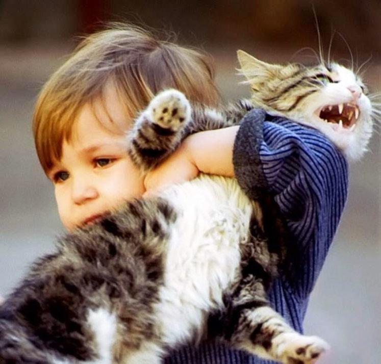 Почему кошек нельзя обижать