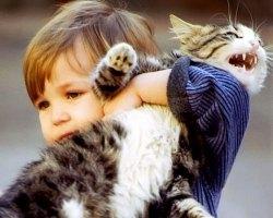 Почему кошек нельзя обижать, приметы