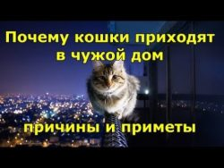 Приметы: Почему кошки приходят в чужой дом - причины
