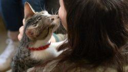 Почему кошки к женщинам лучше относятся, чем к мужчинам?