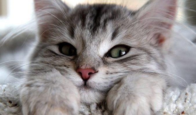 Кошки - природные эмпаты