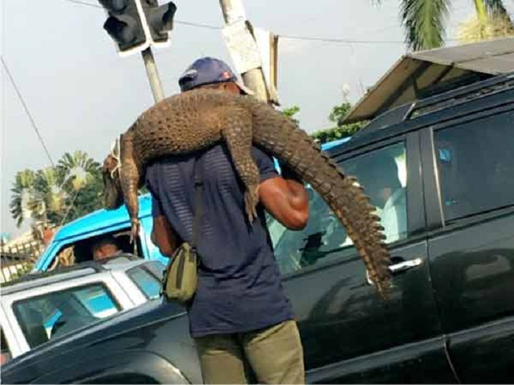 Man appears on the street with huge crocodile, See what happened after