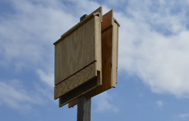 How to build a bat house info you should know - What to know when building a house ...