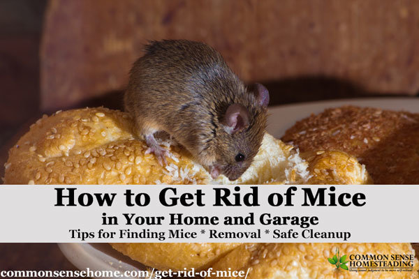 The Best Ways Get Rid of Mice In Your House and Garage ...