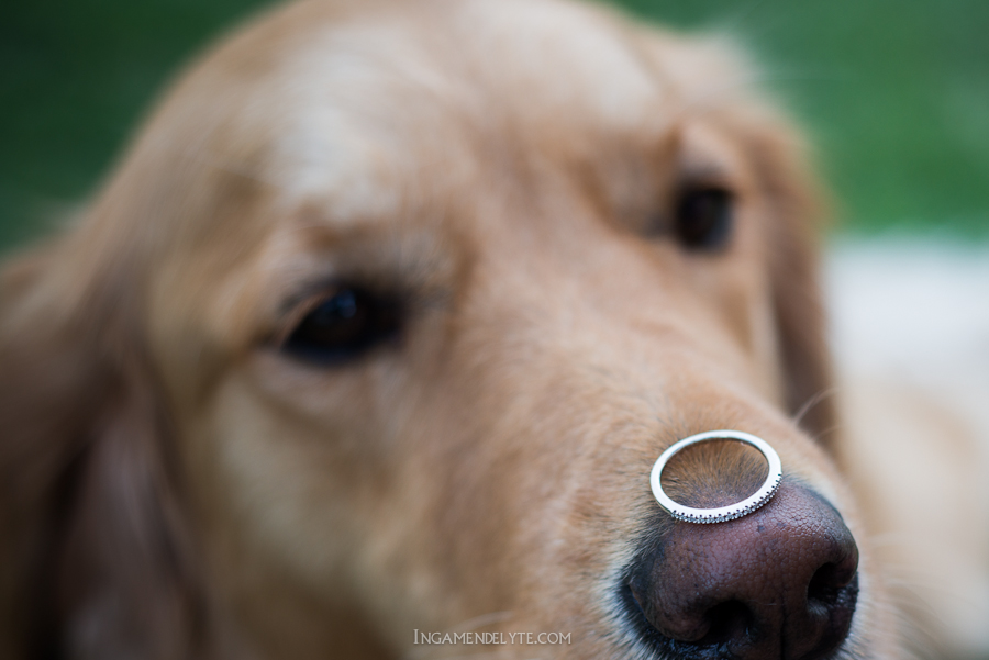 dog with the wedding ring