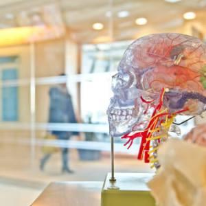 Brain Feature