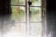 Fönstertittaren
